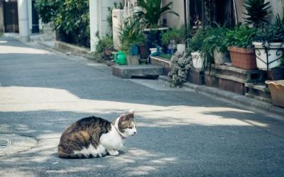 Cats in Ikebukuro
