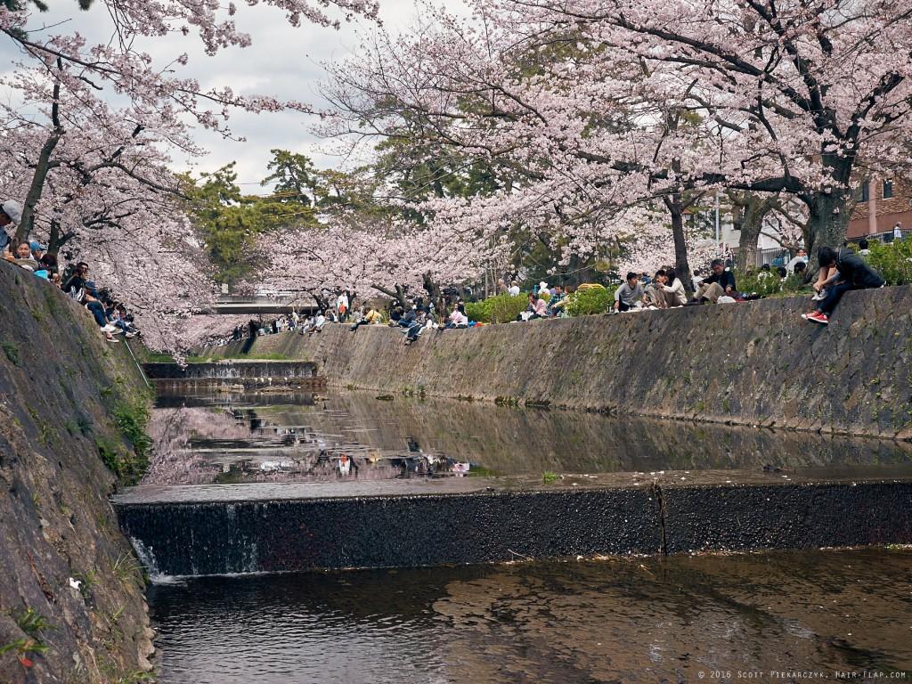 16-04-02.HanamiShukugawa._1130341 1