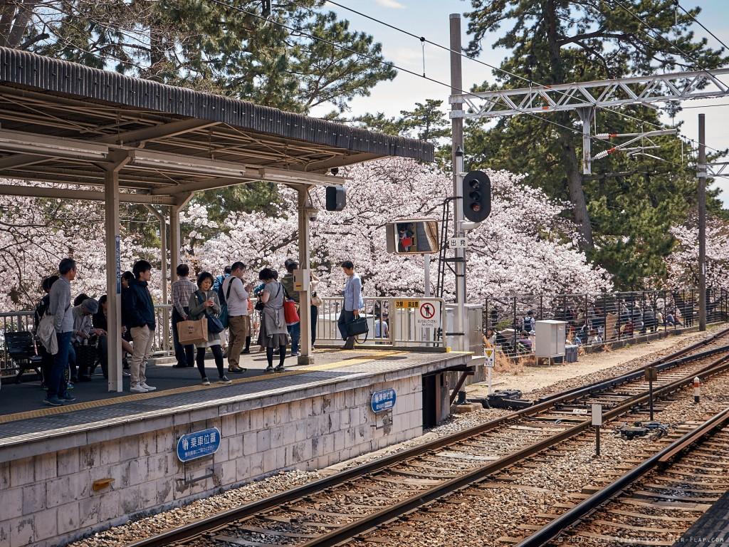 16-04-02.HanamiShukugawa._1130344