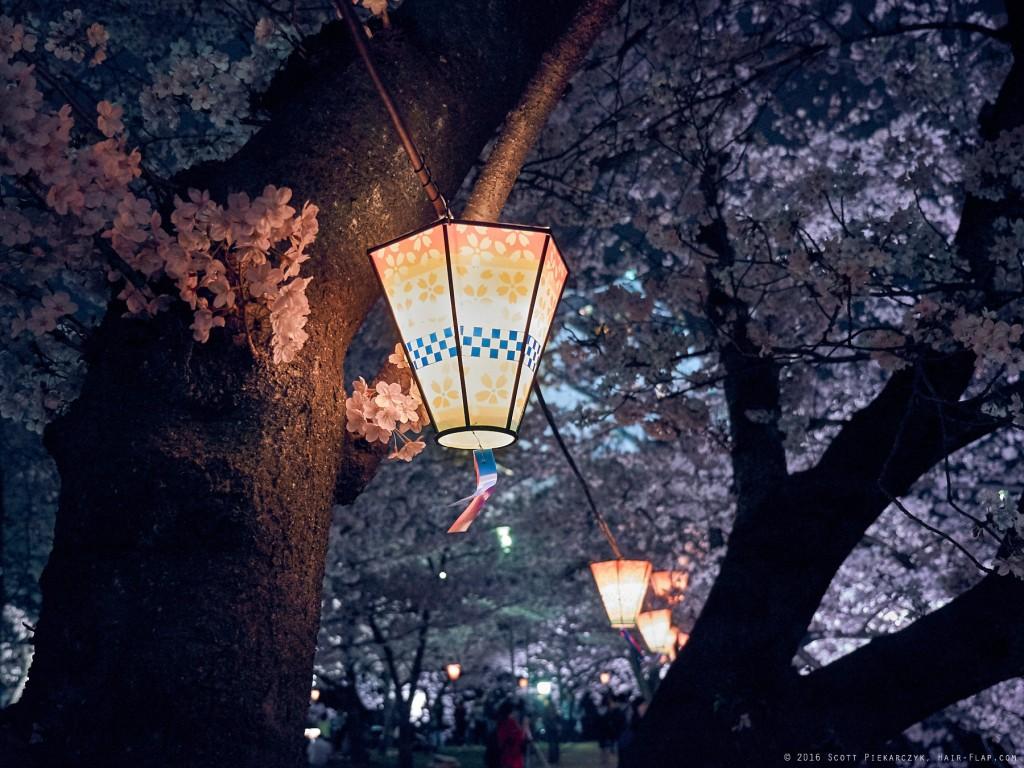 16-04-03.HanamiOsakaCastle._1130385 1