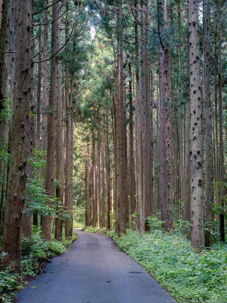 OmoshiroYama-YamaderaHike.15.09.05.-078