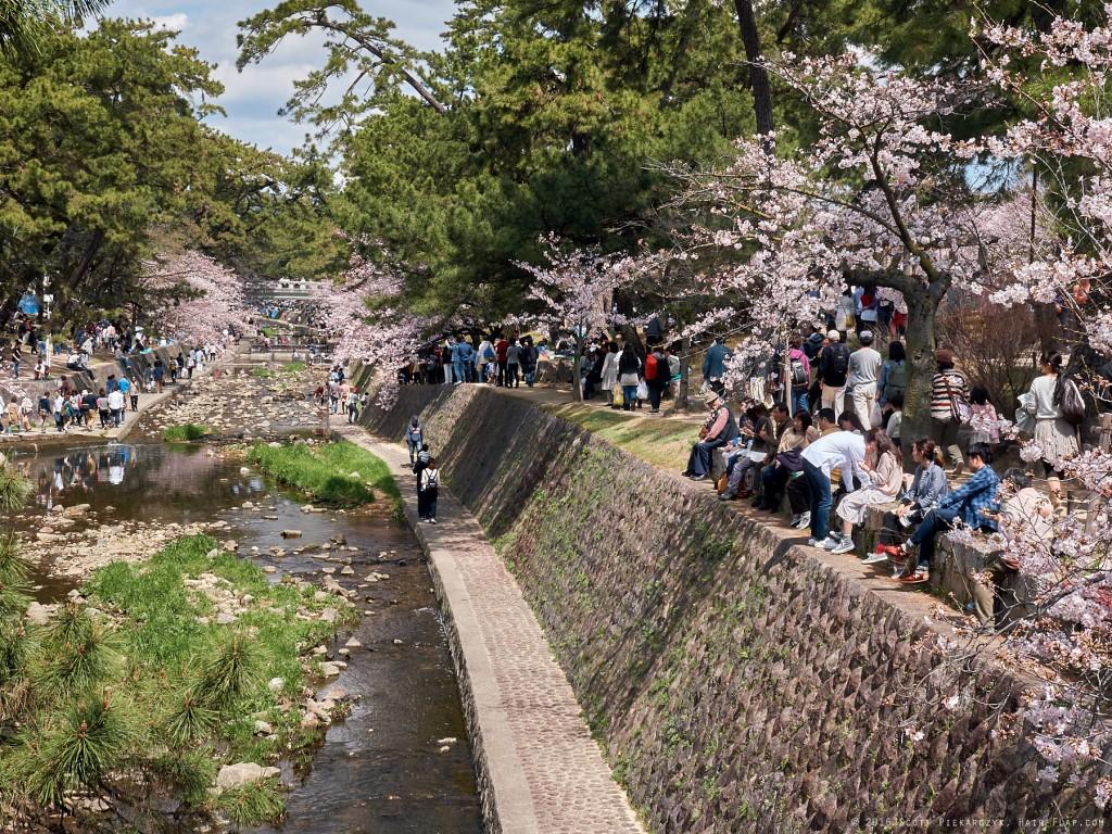 16-04-02.HanamiShukugawa._1130323