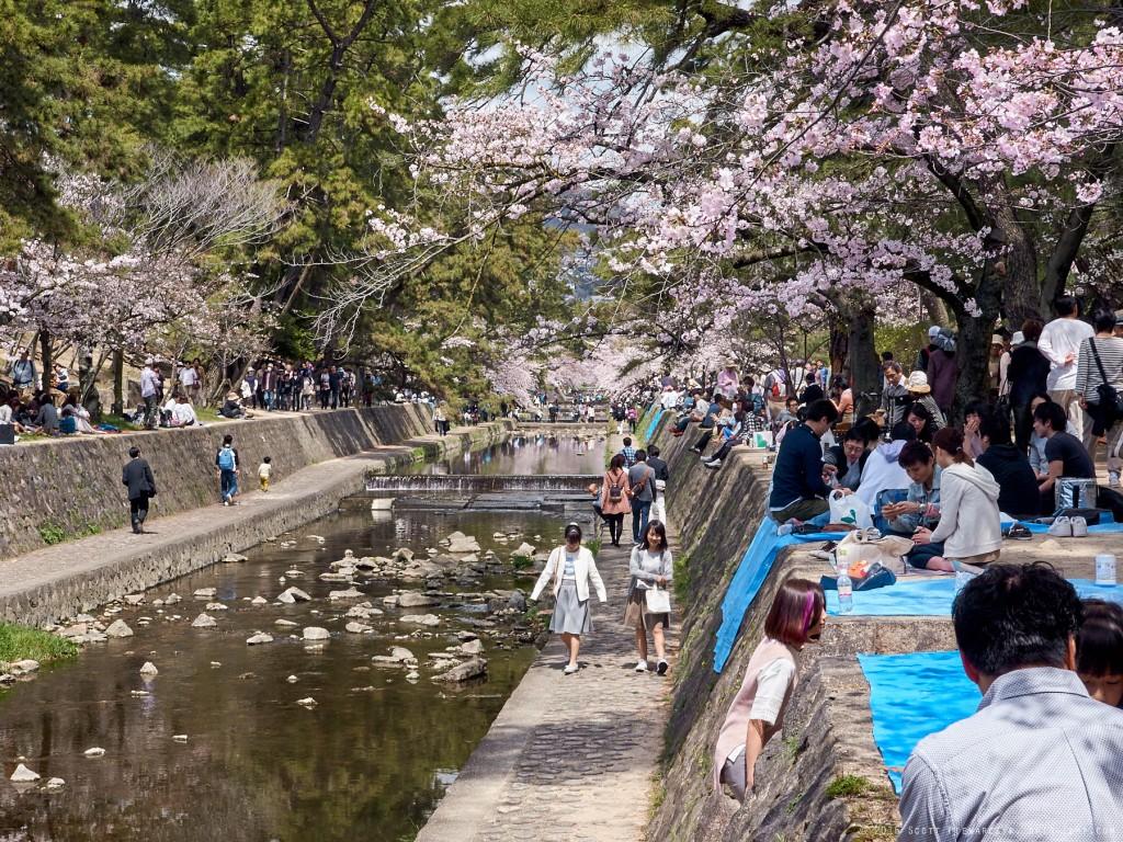 16-04-02.HanamiShukugawa._1130329