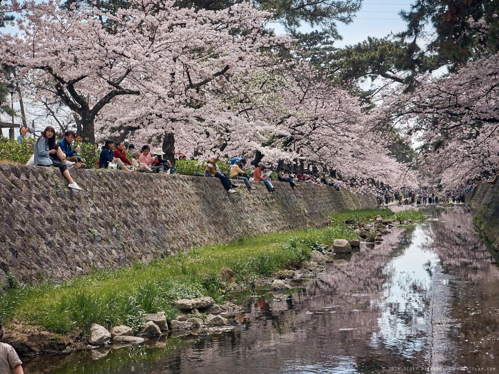 16-04-02.HanamiShukugawa._1130340 1