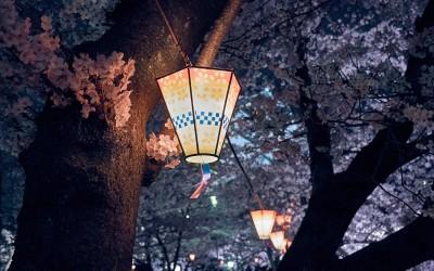 Sakura Season 2016